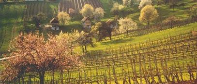 Бургенланд (Burgenland)